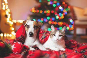 Fill up Stockings with Dog Gifts and Cat Toys at Pet Valu in Brandywine